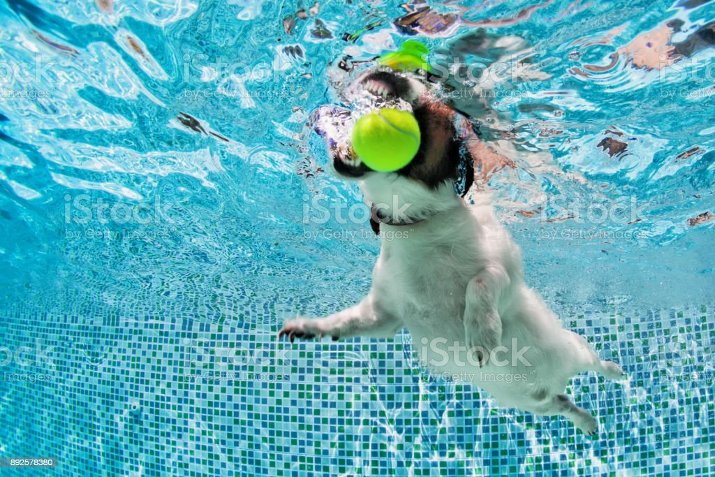 Boule du chien fetch dans la piscine. Photo sous-marine. - Photo