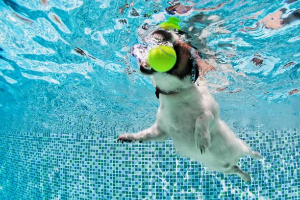Boule du chien fetch dans la piscine. Photo sous-marine. - Photo
