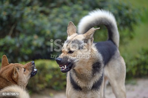 istock dog fight 624676870