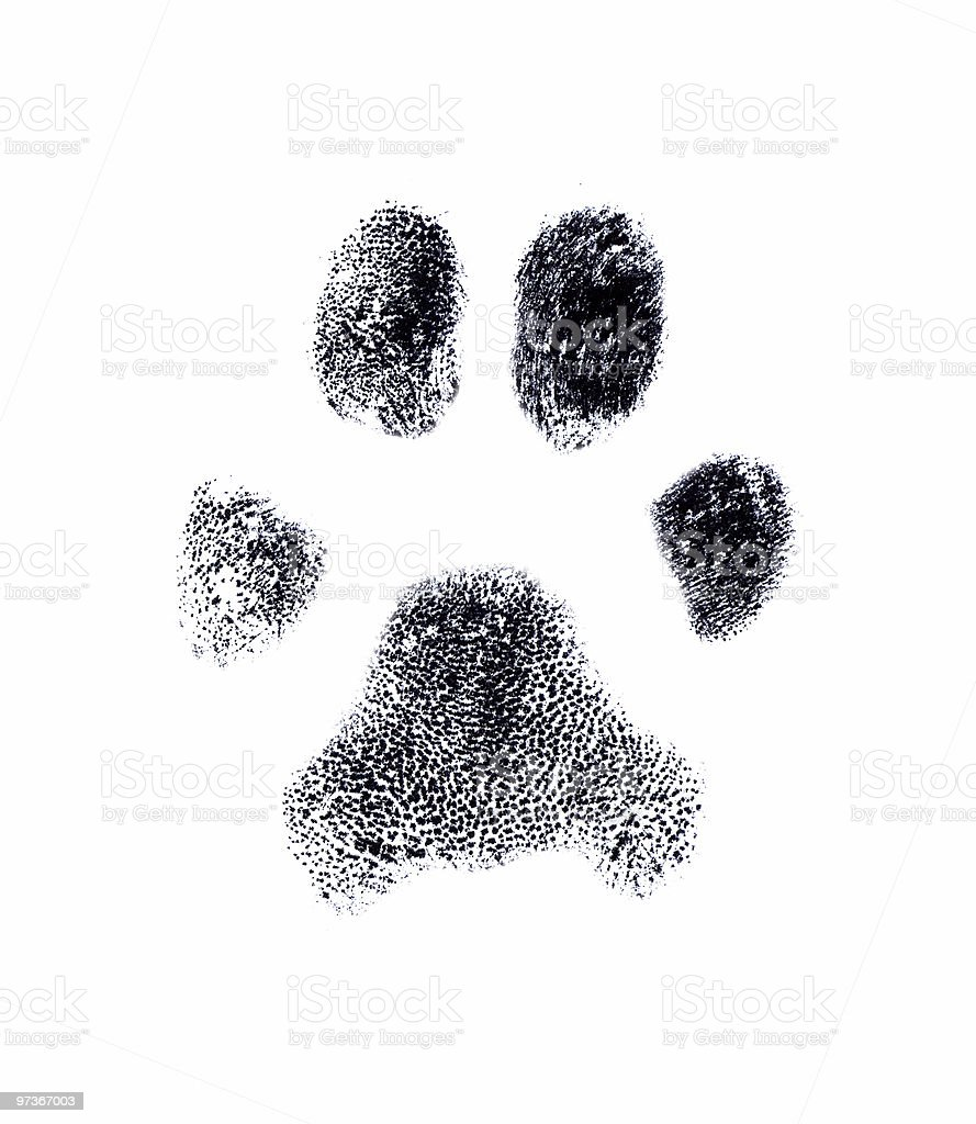 Dog fingerprint stock photo