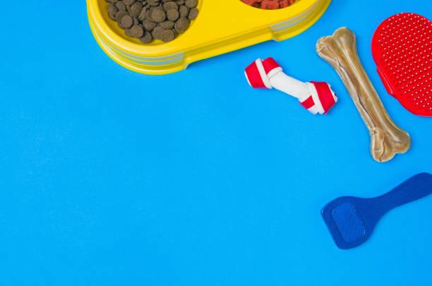 Dog food and accessories on blue background top view picture id908603258?b=1&k=6&m=908603258&s=612x612&w=0&h=6svqijlzcp36zjztjtrjbmif4e3n wavpvs3vvmjdi0=