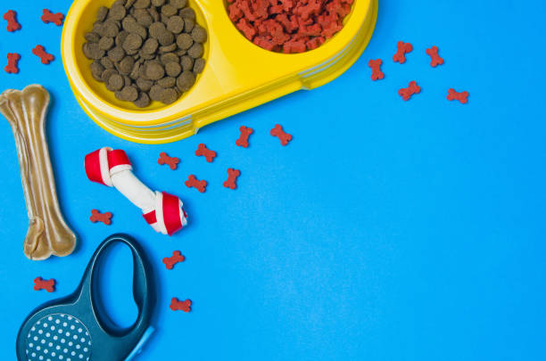 Dog food and accessories on blue background top view picture id908603440?b=1&k=6&m=908603440&s=612x612&w=0&h=lmmj6qi21yheyxxb3zduplv5yyqlikmjczyeofkltoo=