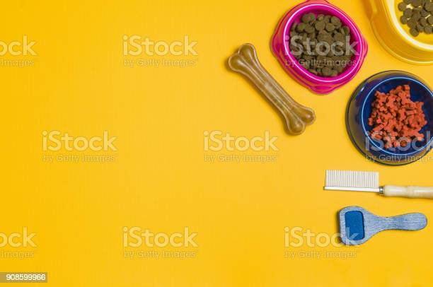 Dog food and accessories on yellow background top view picture id908599966?b=1&k=6&m=908599966&s=612x612&h=hxspnwl8gkpalsy336c2g8dnatjmxercmx lsvw9pn4=