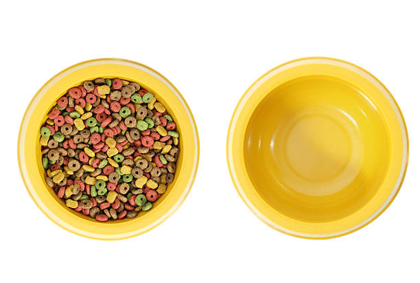 Dog food and water stock photo