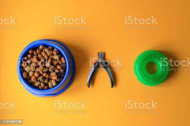 Dog food in a plate with claw scissors and a toy picture id1147497239?b=1&k=6&m=1147497239&s=612x612&h=z9e3c1evki3obsgbit ceddmm5  luiu5grhhr4lpxs=