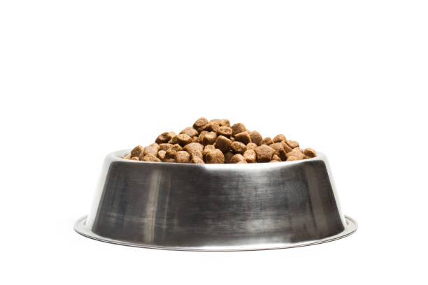 Dog food in a stainless steel bowl picture id1055029940?b=1&k=6&m=1055029940&s=612x612&w=0&h=gu et0erlxxnlcyx6ds7e d3knftjsay0roitz4a vi=
