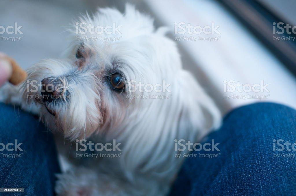 Dog food royalty-free stock photo