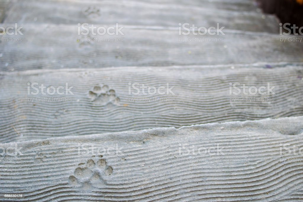 dog footprint on cement stair stock photo