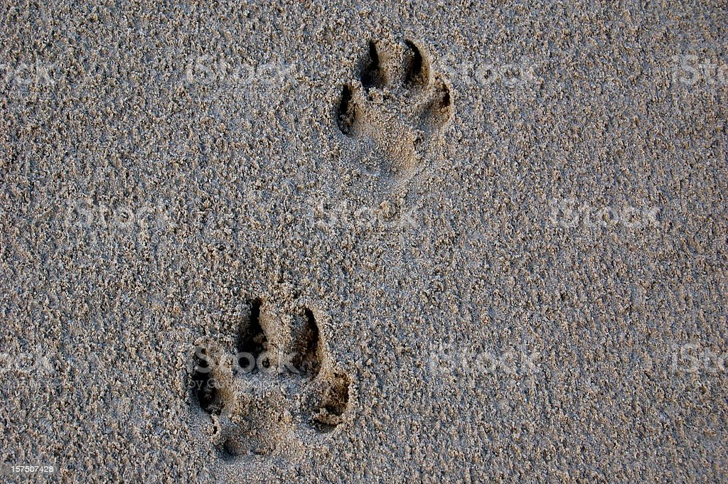 Dog Footprint stock photo