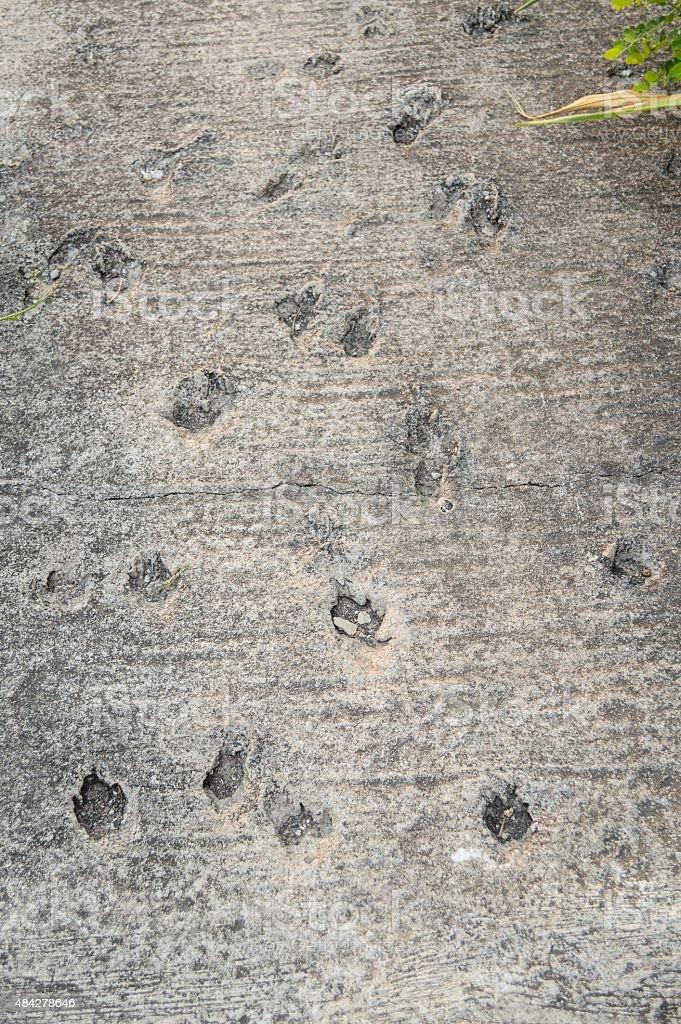 dog footprint stock photo