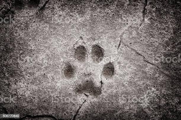 Dog footprint picture id506220840?b=1&k=6&m=506220840&s=612x612&h=oqdk 26x8gcm8vwfjlxv4qmjwbdut0zxkhdowwszttw=