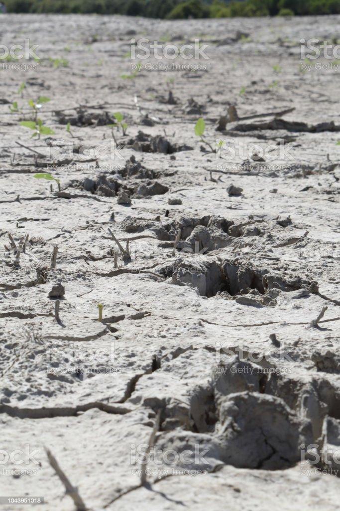 Huellas de perro en perspectiva sobre un suelo de arcilla gris agrietado seco durante un día asoleado caliente en el lago artificial del Mediano en el Pirineo Aragonés Español - foto de stock