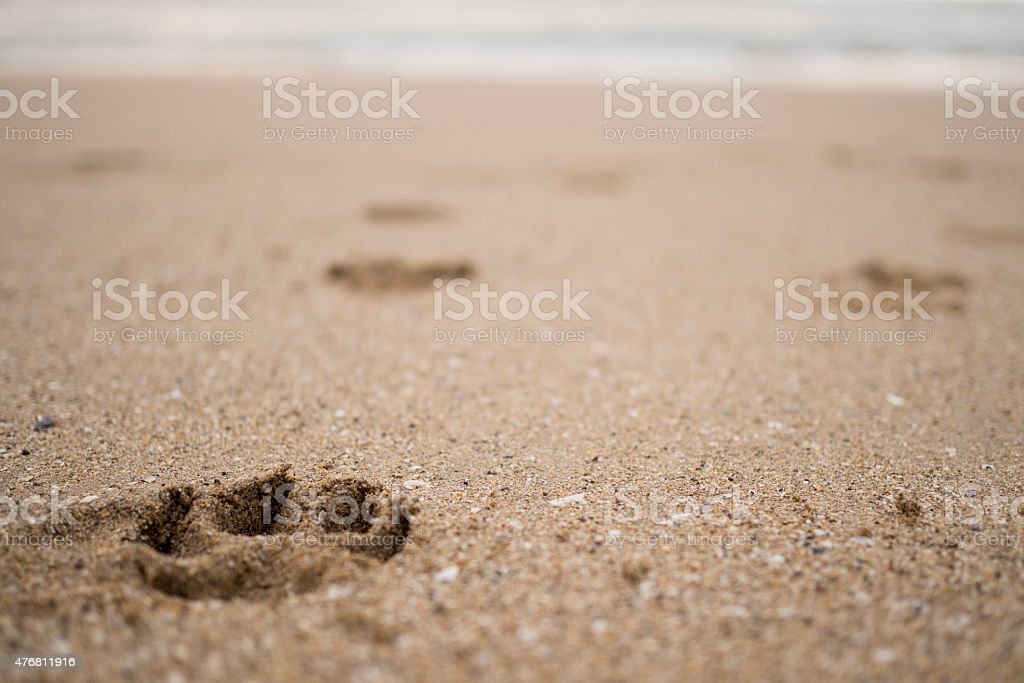 Dog footprints in the beach stock photo