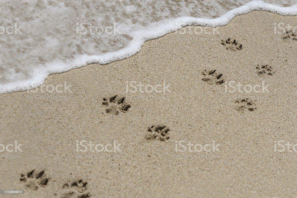 Hund Fußabdrücke im sand Lizenzfreies stock-foto