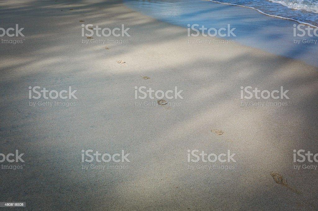 Dog footprints on the sand stock photo