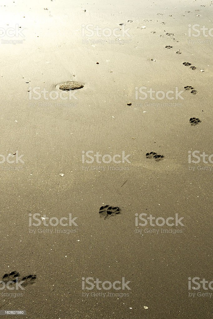 Dog footprints towards light royalty-free stock photo