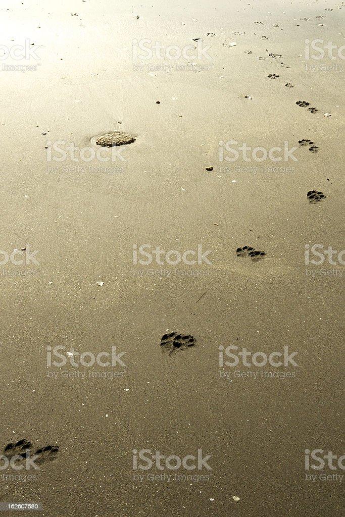 Dog footprints towards light stock photo
