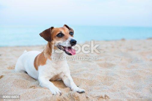 istock Dog friendly beach holidays 506916605