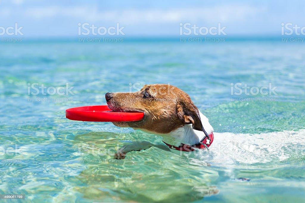 dog frisbee stock photo