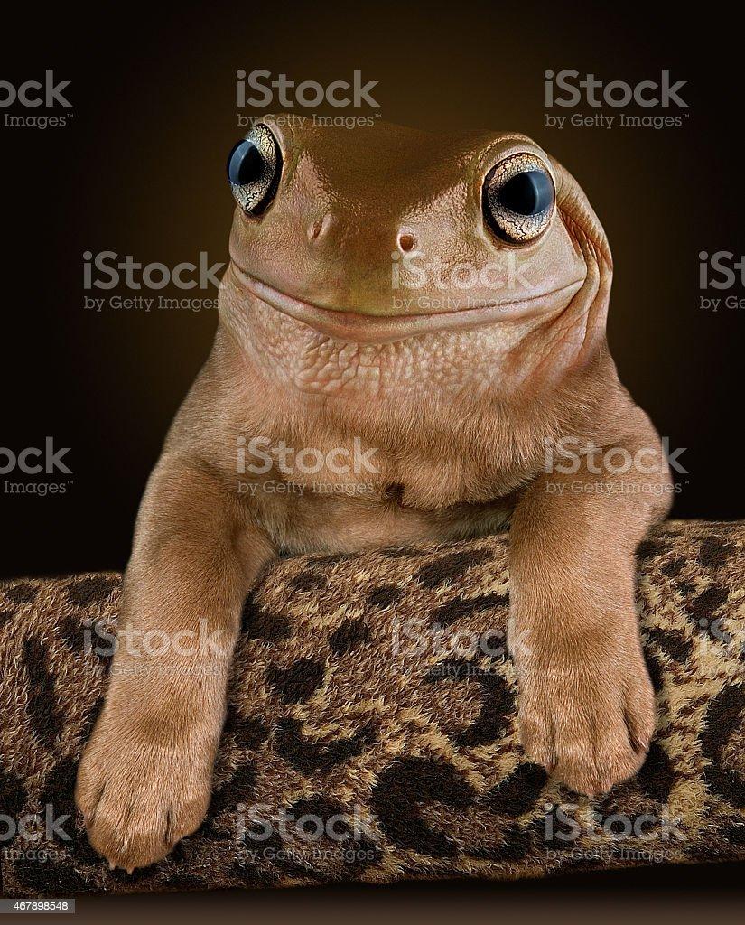 Dog Frog stock photo