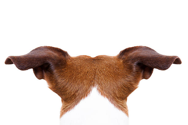 Dog from behind back picture id486029078?b=1&k=6&m=486029078&s=612x612&w=0&h=61peikzspmwvqjhh6v0rlauk p81fytrbijj6d2vxa4=