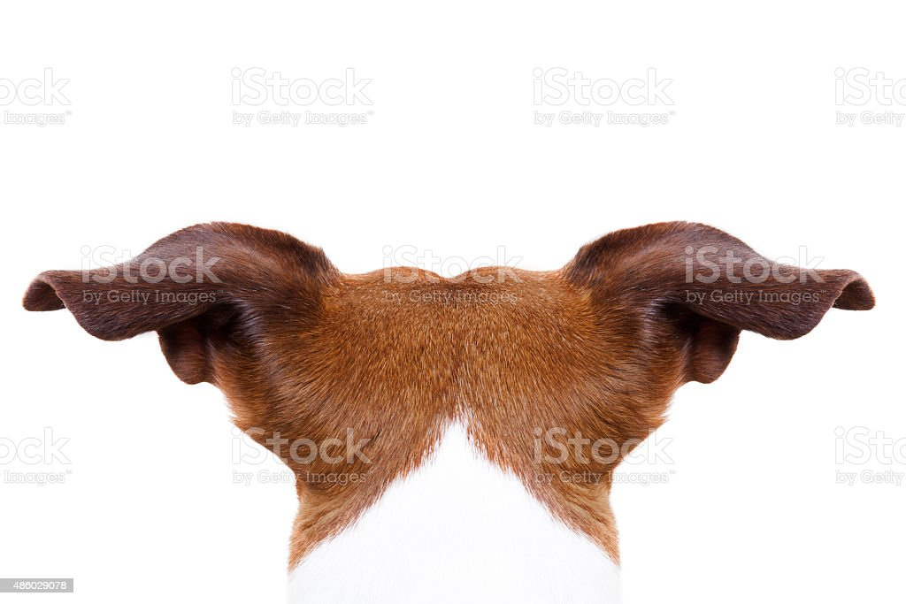 dog from behind back stock photo