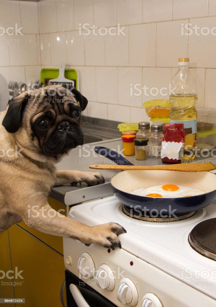 Dog fry eggs stock photo