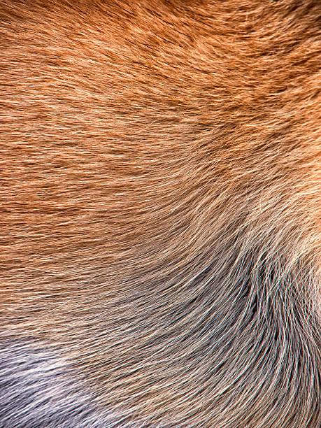 dog fur background stock photo