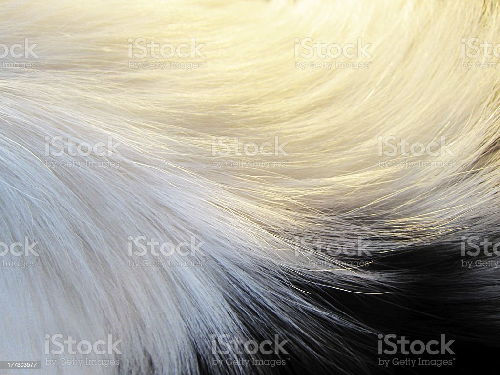 dog fur, detail, close-up, with short depth of field stock photo