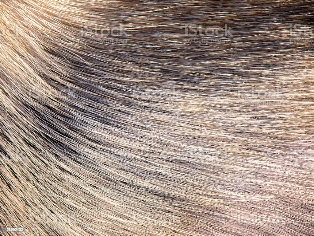 dog fur stock photo