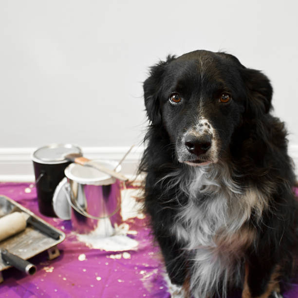 Dog gets into painting project stock photo