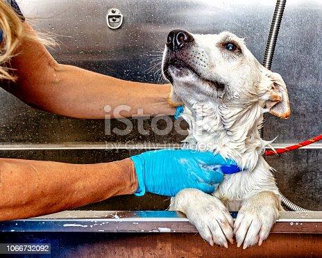 Happy dog getting a bath in a tub by a groomer at a salon
