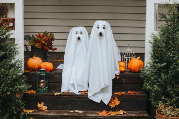 cadılar bayramı için köpek hayalet - happy halloween stok fotoğraflar ve resimler