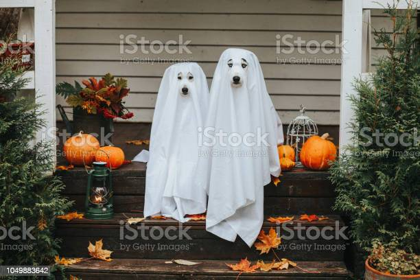 Dog Ghost For Halloween Stock Photo - Download Image Now