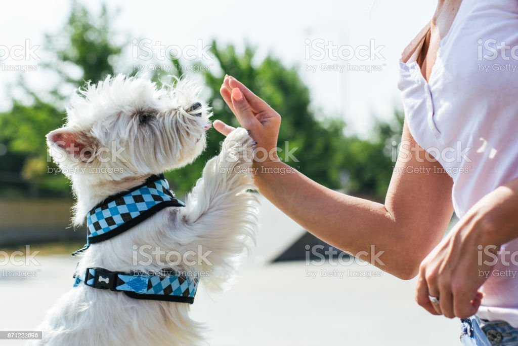 Dog give a high five to owner stock photo