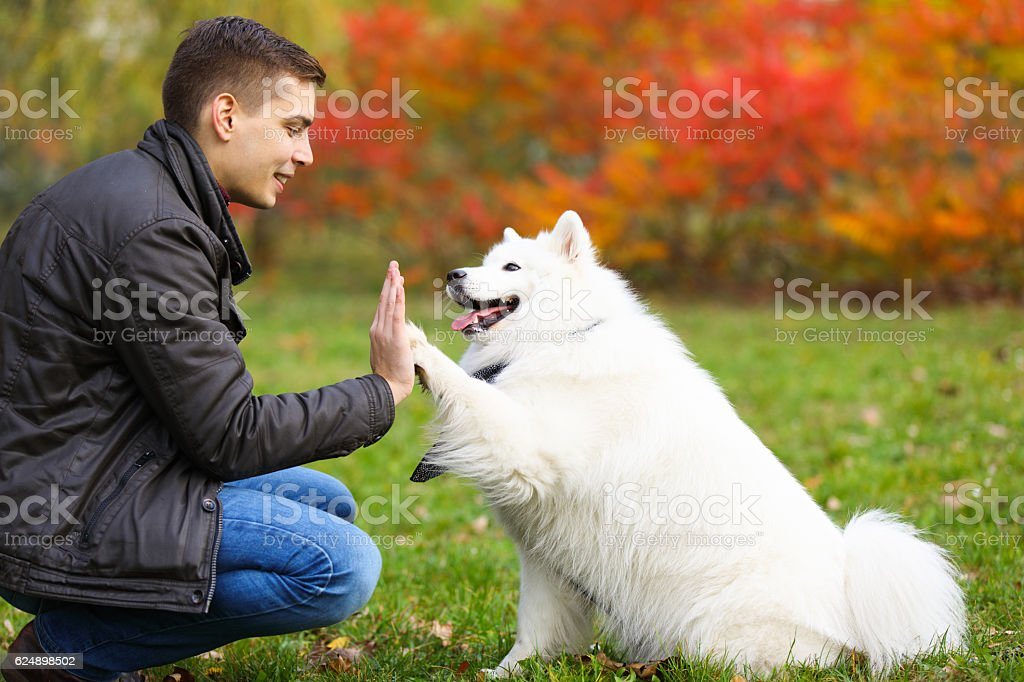 Dog giving a young man a high five stock photo