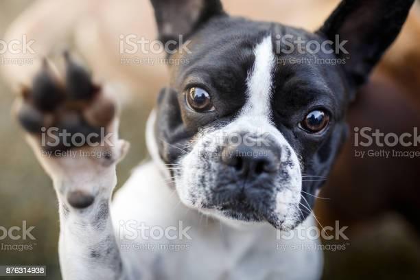 Dog giving paw picture id876314938?b=1&k=6&m=876314938&s=612x612&h=euwcv8mserqzalyjrewb9vffqfdrzllp0a8ghjkmur4=