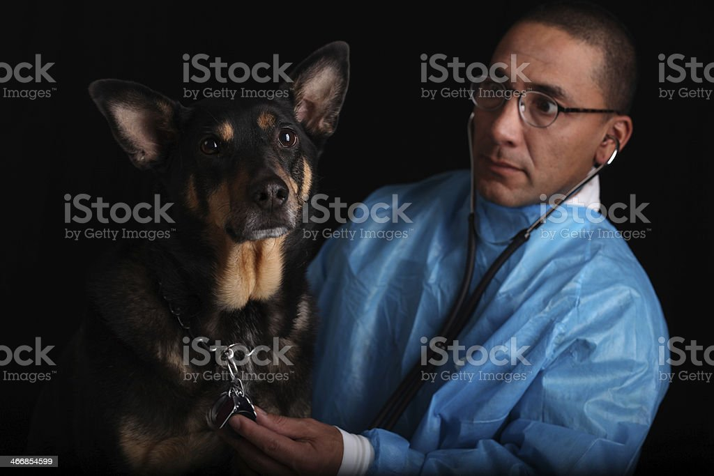 Dog Goes to the Doctor royalty-free stock photo