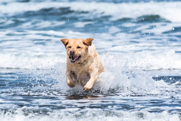 Dog going out and enjoying on the beach