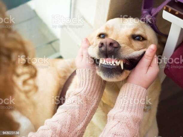 Dog golden retriever portrait picture id943023136?b=1&k=6&m=943023136&s=612x612&h=xugcnio hot9et5wxttewebafxfhlsnekoja43cc5ww=