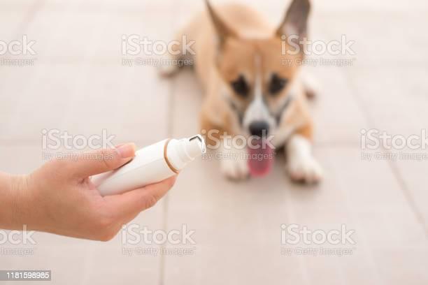 Dog grinding toenails in hand picture id1181598985?b=1&k=6&m=1181598985&s=612x612&h=jpvfqitw5rmahg mgkauedanmtvo7zy6ossqgwphsbm=