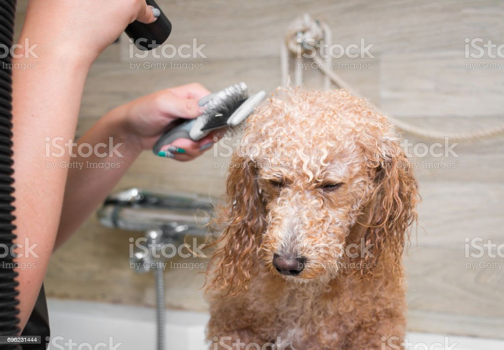 Pet grooming | psd free download pikbest.