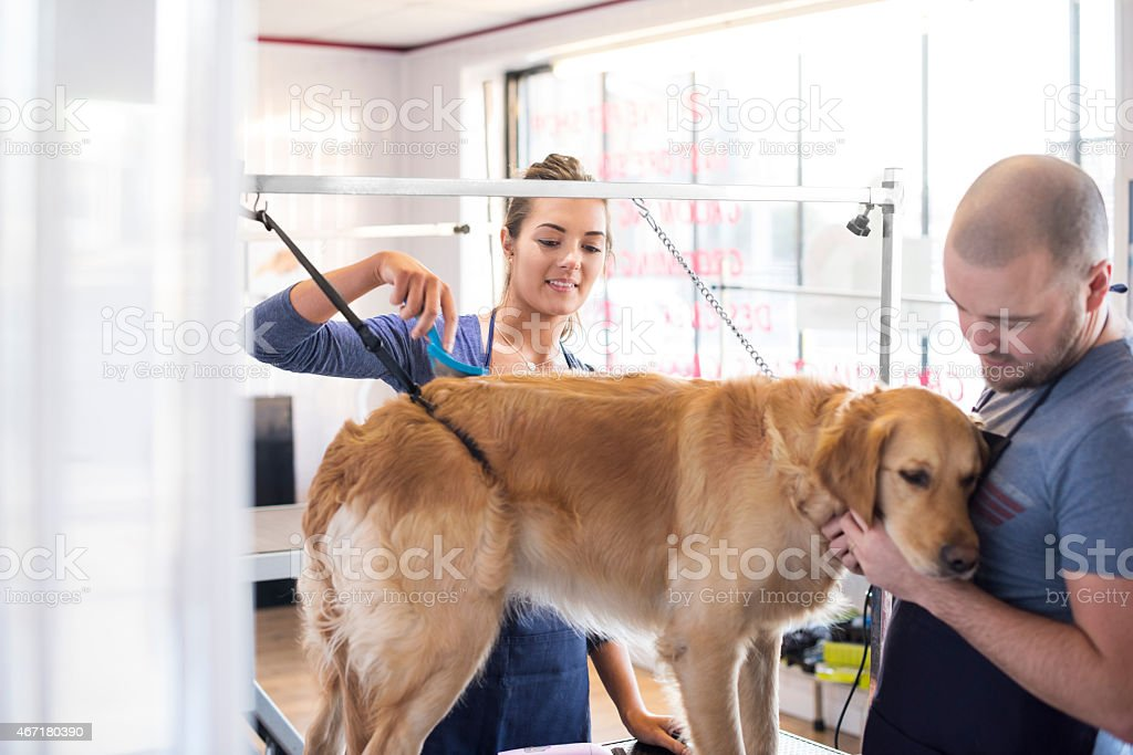 Dog grooming apprentice with supervisor stock photo