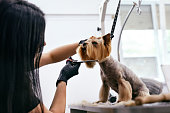 Dog Grooming At Pet Salon. Funny Dog Getting Haircut