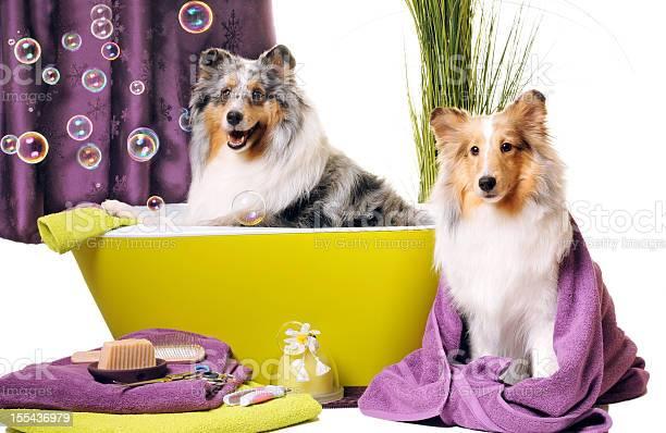 Dog grooming picture id155436979?b=1&k=6&m=155436979&s=612x612&h=a15ggfmblhdc8t4djulpnqzbwkqljngubqt0ilkyqr8=