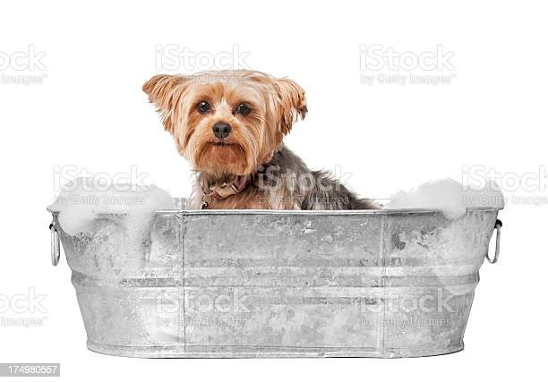 Dog grooming picture id174980557?b=1&k=6&m=174980557&s=612x612&h=rlyoptio3otn3xas6hprntddj1ozhrc6hapdzis7gue=