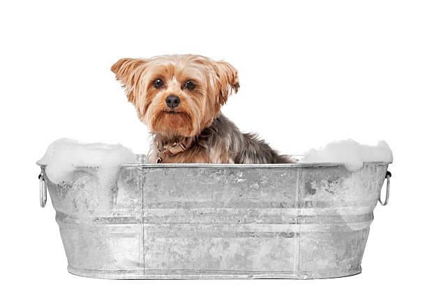 Dog grooming picture id174980557?b=1&k=6&m=174980557&s=612x612&w=0&h= 5lbb48c6q4daktfmgzud5eqdriln9  3ddovfg3o0q=