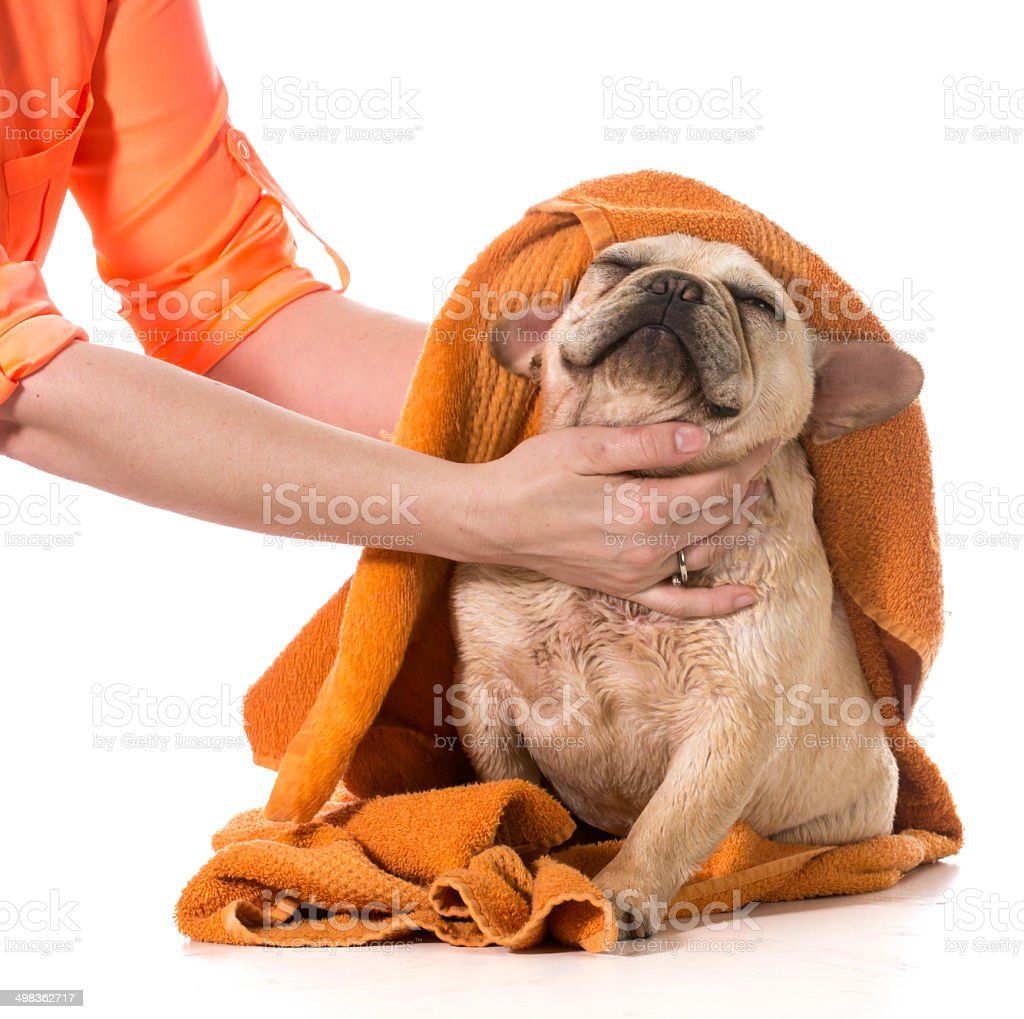 dog grooming stock photo