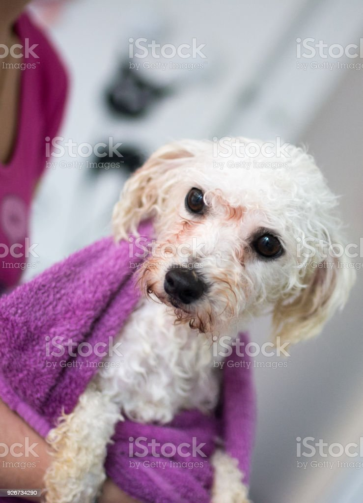 Download -pdf-] the all breed dog grooming guide txt,pdf,epub.