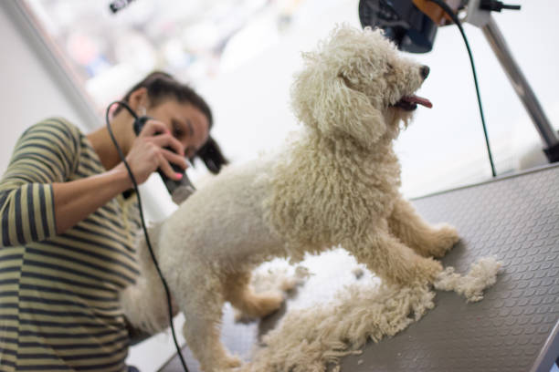 dog grooming - pet shop and dogs not cats stock pictures, royalty-free photos & images
